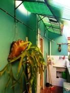 Casa en Ampliación Almendares, Playa, La Habana 9