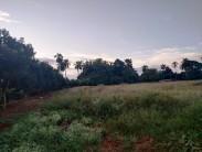 Casa de Campo en San Paul, San Antonio de los Baños, Artemisa 13