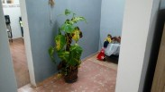 Casa en Río Verde, Boyeros, La Habana 14