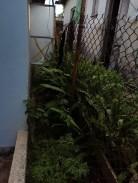 Casa Independiente en Nuñez, San Miguel del Padrón, La Habana 13