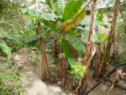 Casa Independiente en Párraga, Arroyo Naranjo, La Habana 8